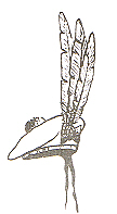 Chief's hat with three feathers.